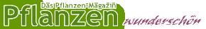 Pflanzen Magazin wunderschön